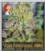 Expert Sweet Zomie Female 10 Marijuana Seeds
